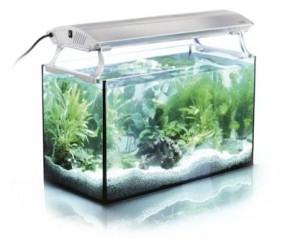 planted-aquarium-lighting