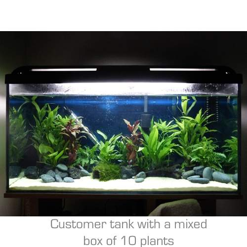 Mixed Box of 10 Aquarium Plants