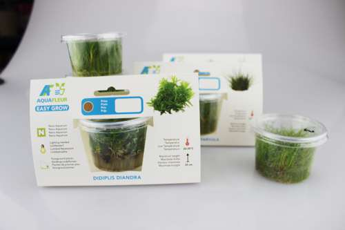 tissue cultured aquarium plants