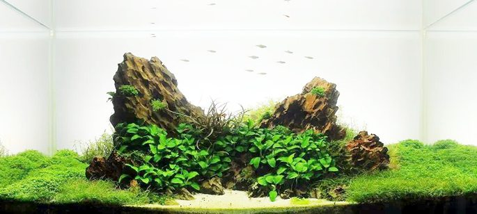 Aquascaping our way to health