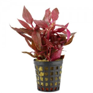 Have you seen these new aquarium plants?