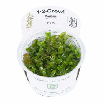 Tropica Bacopa carolina 1-2-GROW!