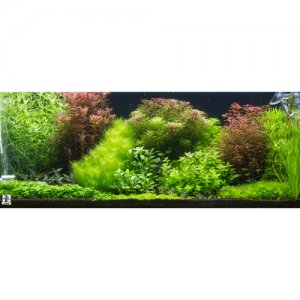 Dutch Style Mixed Box of Aquarium Plants