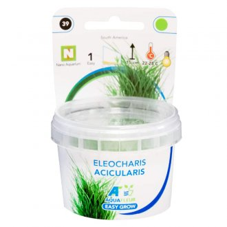 Easy Grow - Eleocharis acicularis