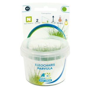 Easy Grow - Eleocharis parvula