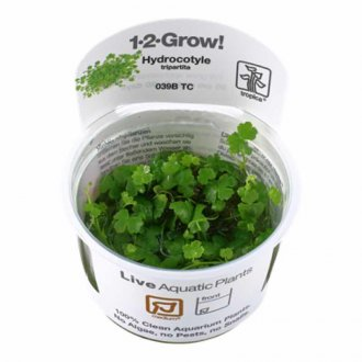Tropica Hydrocotyle tripartita 1-2-GROW!