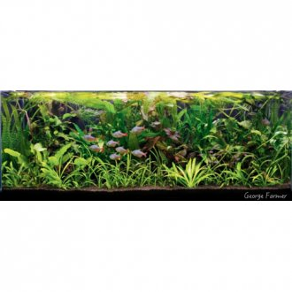 Jungle Style Mixed Box of Aquarium Plants