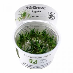 Tropica Littorella uniflora 1-2-GROW!