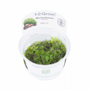 Tropica Monosolenium tenerum 1-2-Grow!