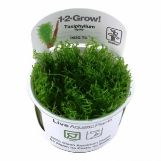 Tropica Taxiphyllum spiky 1-2-Grow!