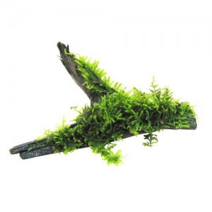 Moss on Wood (size 12-18cm)