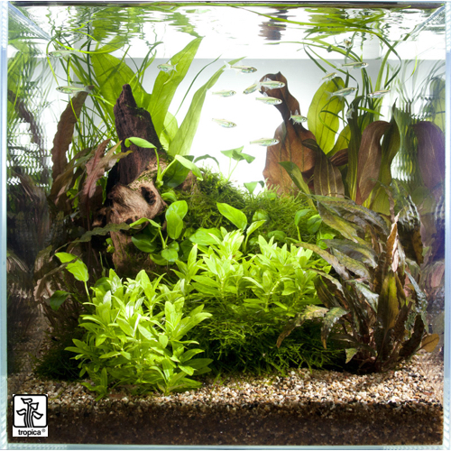 Aquascape Plants For Sale: 'Scaped For You' Collection