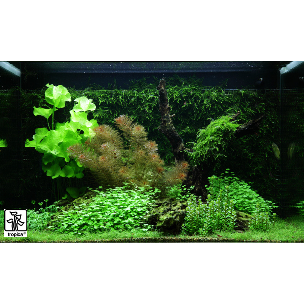 Fish tank real plants -  Scaped For You Collection Layout 64 100l Medium