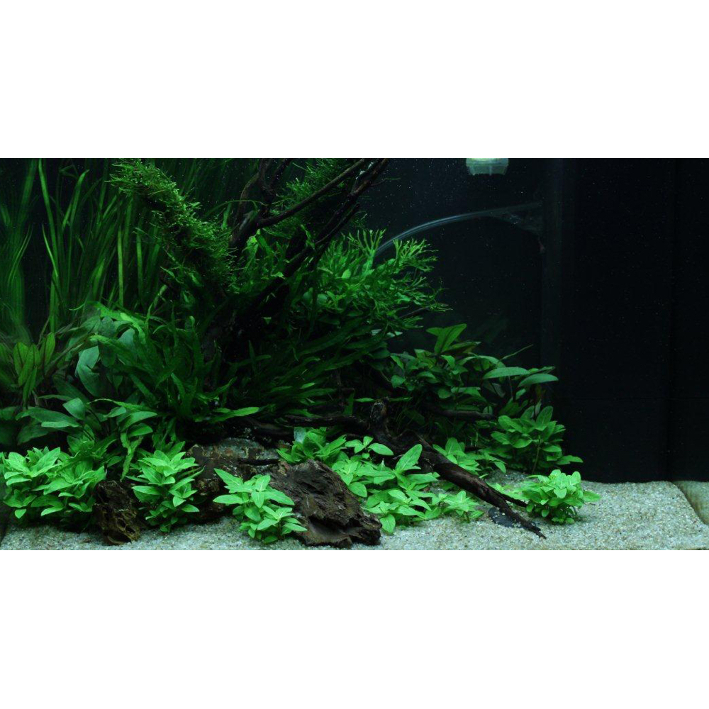 39 scaped for you 39 collection layout 68 120l easy for Aquarium 120l